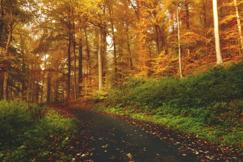 nature-mental-health-awareness-week